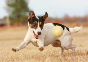активный щенок