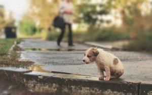 щенок на улице