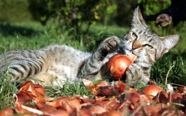 Ветеринарный гастроэнтеролог Пущина Людмила Анатольевна рассказывает про отравления луком и чесноком у кошек и собак: симптомы, диагностика и лечение.