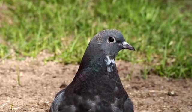 Многие против соседства птиц