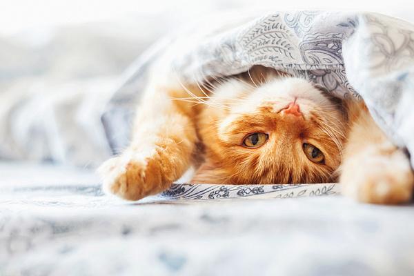 Сколько спят кошки?