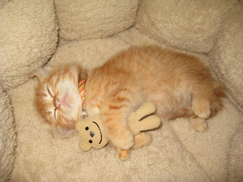 Котёнок спит.jpg